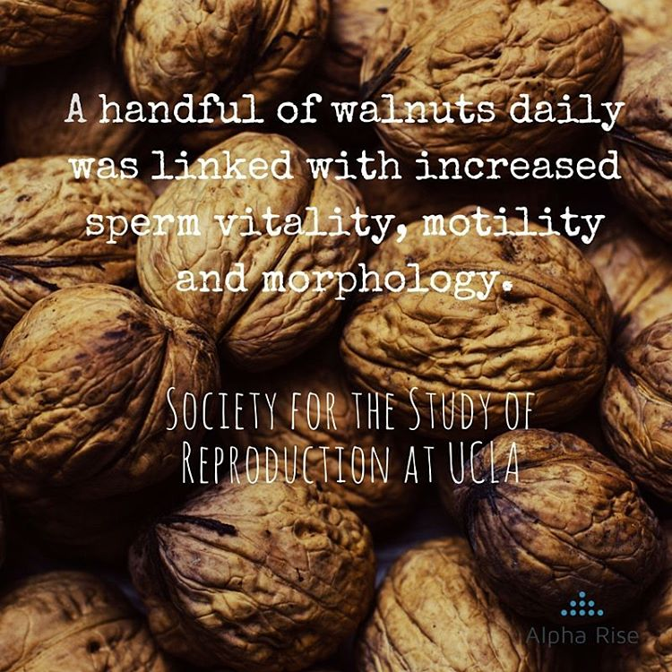 Male fertility: Walnuts Improve semen quality in men Alpha Rise Health
