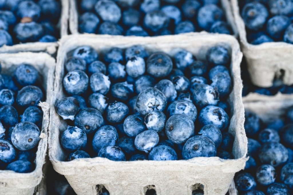Blueberries and its benefits, what you need to know Alpha Rise Health