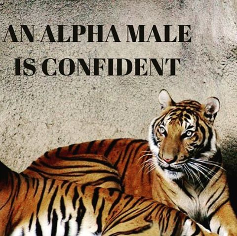 Alpha males are confident Alpha Rise Health