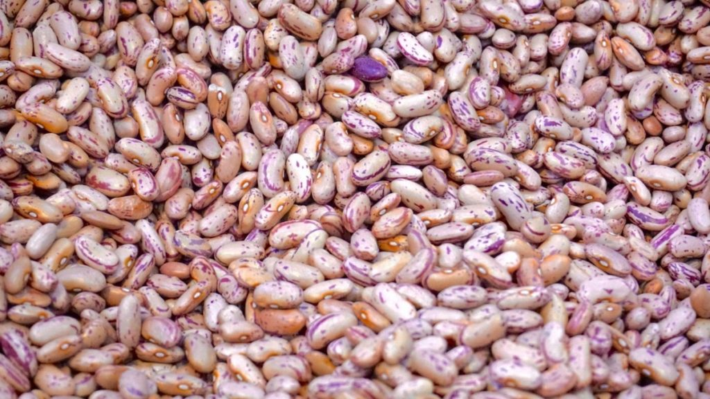 Life Tips: Beans and its benefits Alpha Rise Health
